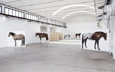 12 CAVALLI / 12 HORSES